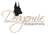 www.DragomirDobermans.com